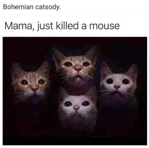 Bohemian Catsody