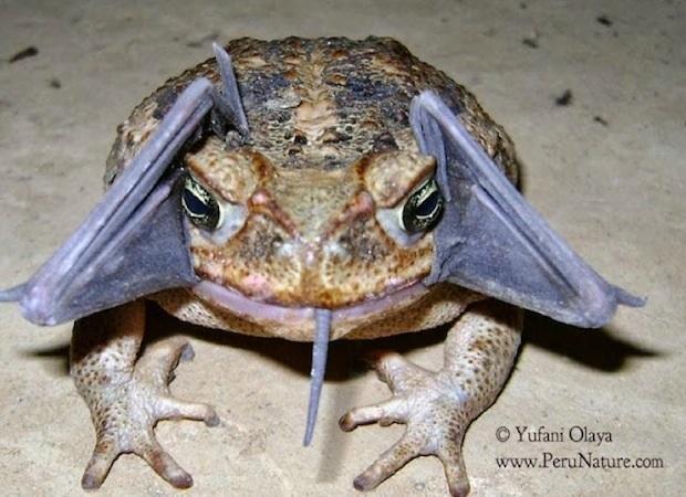 batfrog